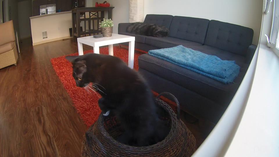 Sepet içinde kedi